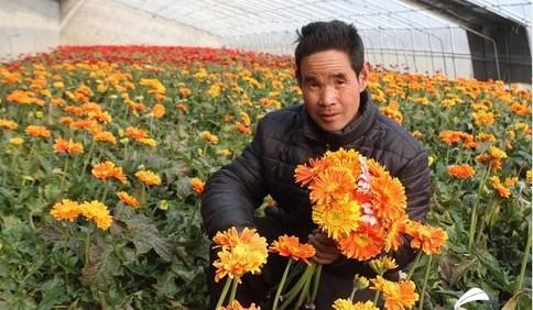 微信搭起爱心桥 临沂平邑2万支扶贫鲜花仅2天销售一空